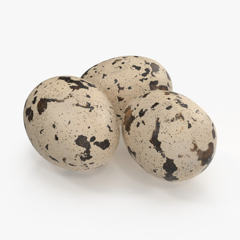 Organic quail eggs for sale,Buy organic quail eggs for sale
