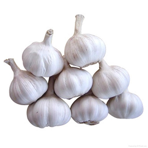 Buy White Fresh Garlic Online ,White Fresh Garlic for Canada